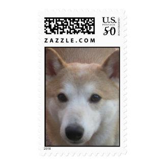 Shiba Inu Postage
