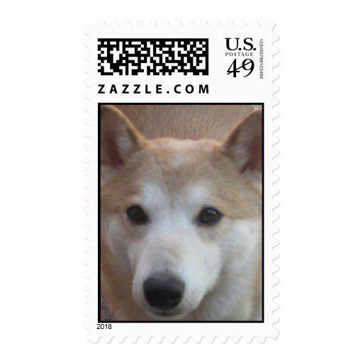 Shiba Inu Postage Stamp