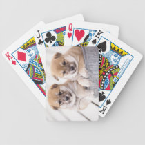 Shiba Inu puppies in aluminum tub Bicycle Playing Cards