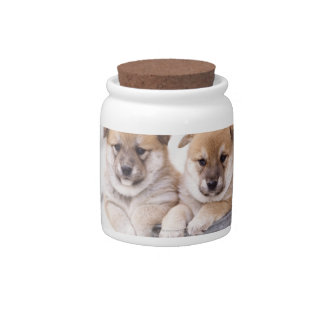 Shiba Inu puppies in aluminum tub Candy Jars