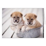 Shiba Inu puppies in aluminum tub Card