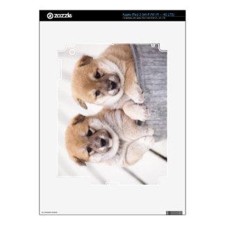 Shiba Inu puppies in aluminum tub Decals For iPad 3