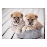 Shiba Inu puppies in aluminum tub Greeting Card