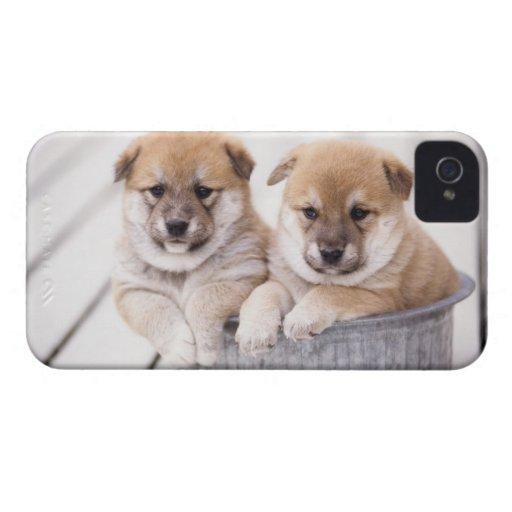 Shiba Inu puppies in aluminum tub iPhone 4 Case-Mate Case