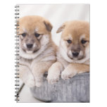 Shiba Inu puppies in aluminum tub Notebook