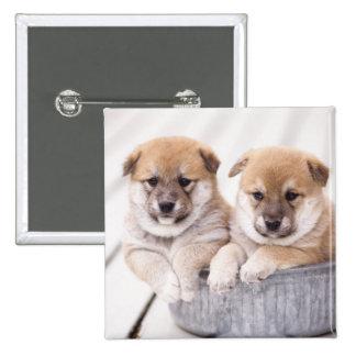 Shiba Inu puppies in aluminum tub Pinback Button