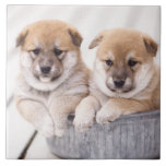 Shiba Inu puppies in aluminum tub Large Square Tile