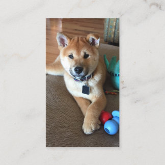 Shiba Inu Puppy Portrait With Colorful Toys Photo Business Card