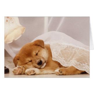 Shiba Inu puppy sleeping under a net curtain Card