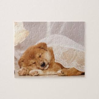 Shiba Inu puppy sleeping under a net curtain Puzzles