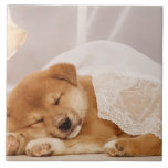 Shiba Inu puppy sleeping under a net curtain Ceramic Tiles