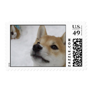 Shiba Inu Puppy - Up Close and Personal! Stamp