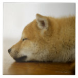 Shiba-ken durmiente 3 azulejo ceramica