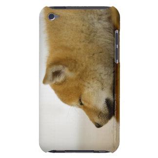 Shiba-ken durmiente 3 iPod Case-Mate fundas