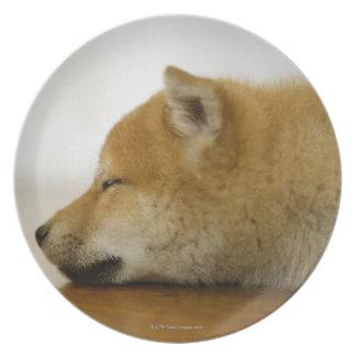 Shiba-ken durmiente 3 platos de comidas