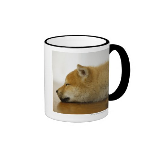 Shiba-ken durmiente 3 taza de café