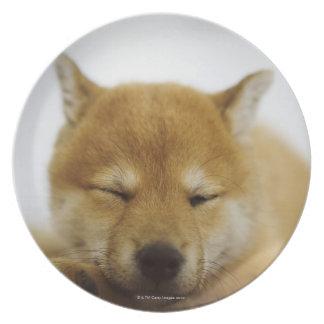 Shiba-ken durmiente platos