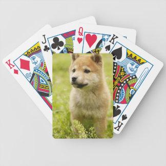 Shiba-ken puppy bicycle playing cards