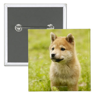 Shiba-ken puppy button