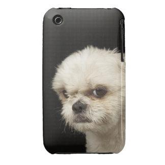 Shih blanco enojado Tzu con los ojos marrones iPhone 3 Case-Mate Fundas