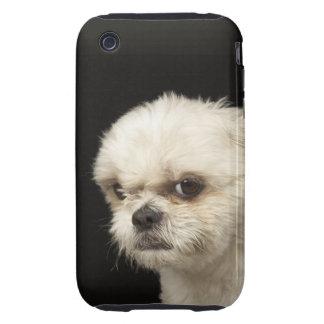 Shih blanco enojado Tzu con los ojos marrones Tough iPhone 3 Carcasas
