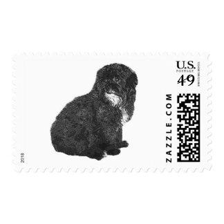 Shih Poo Postage Stamp