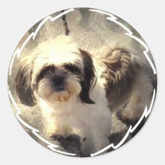 Shih-Tsu Dog Stickers