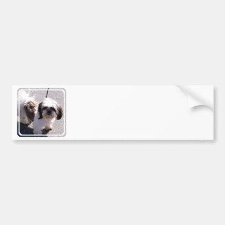 Shih Tsu Puppy Bumper Sticker