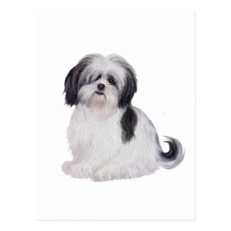 Shih tzu (A) - black and white Post Cards