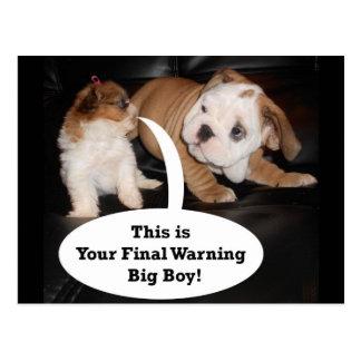 Shih Tzu and English Bulldog Puppys Postcard