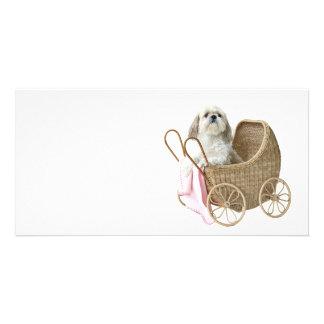 Shih Tzu baby carriage Card