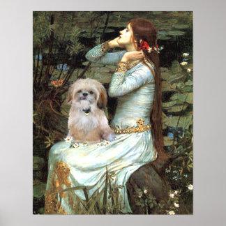 Shih Tzu (brown-cream) - Ophelia Seated Poster