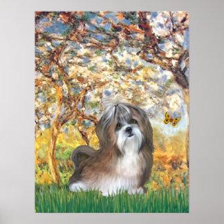 Shih Tzu (brown-white)  - Spring Poster