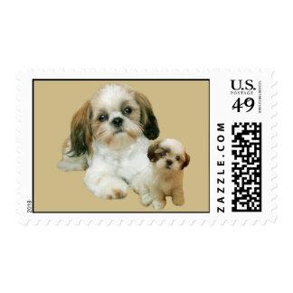 Shih Tzu Buddies Postage Stamp