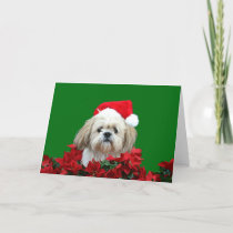 Shih Tzu  Christmas Holiday Card