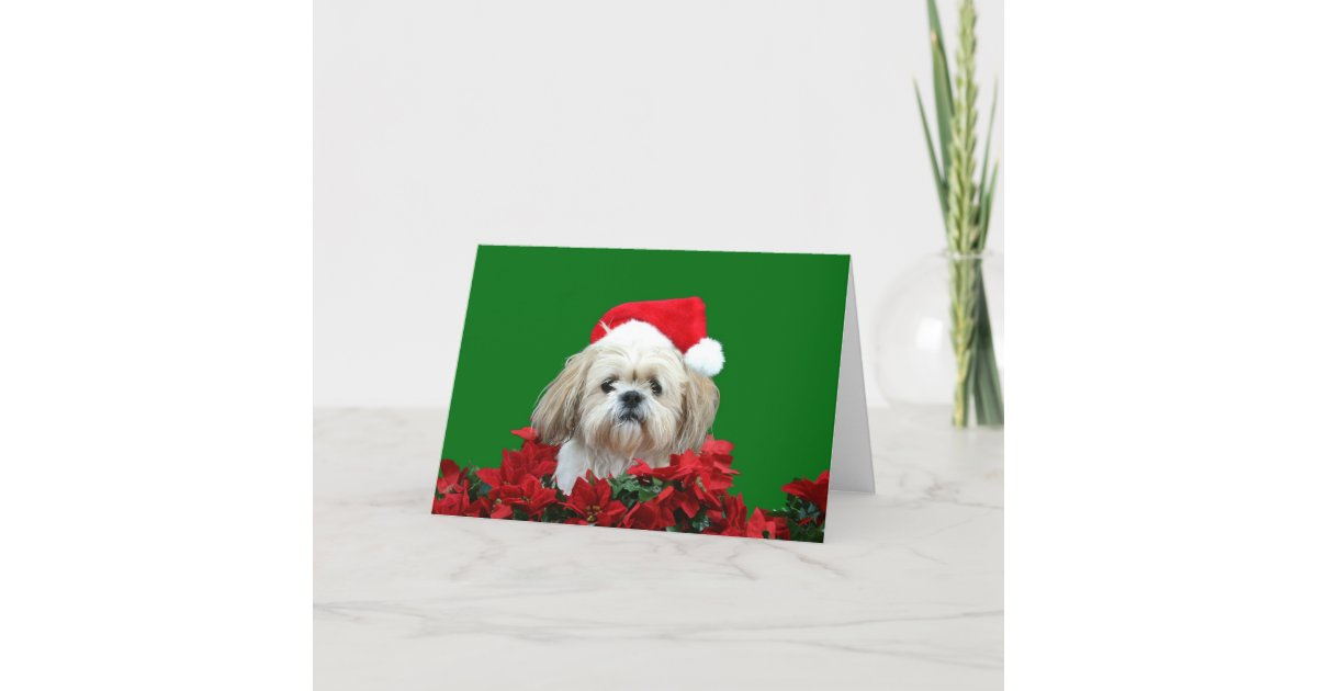 Shih Tzu Christmas Holiday Card | Zazzle.com