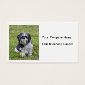 Shih Tzu dog beautiful cute photo business card