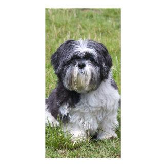 Shih Tzu dog beautiful, cute photo card
