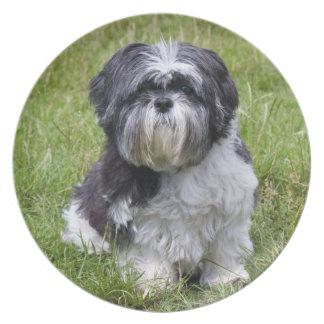 Shih Tzu dog beautiful cute photo dish, plate