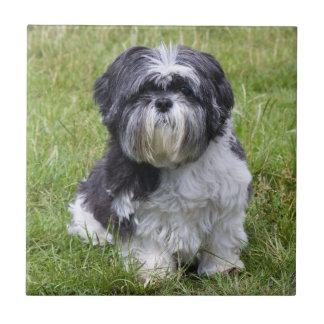 Shih Tzu dog beautiful cute photo tile or trivet