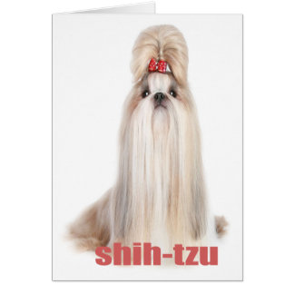 shih-tzu dog breeds シーズー - シーズー犬の品種 card