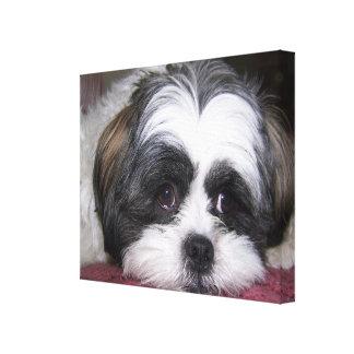 Shih Tzu Dog Canvas Print