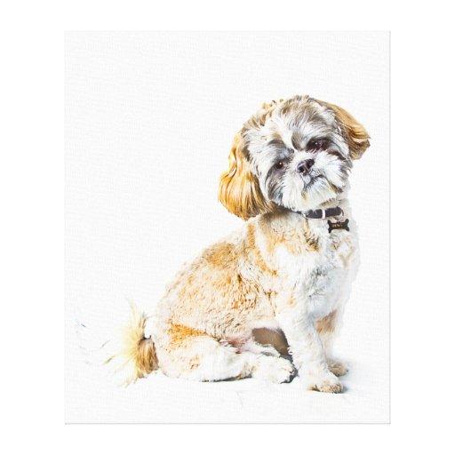 Shih Tzu Dog Canvas Gallery Wrap Canvas
