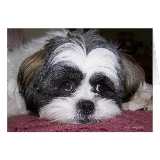 Shih Tzu Dog Card
