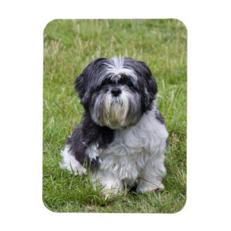 Shih Tzu dog cute beautiful photo magnet