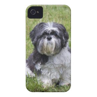 Shih Tzu dog cute photo blackberry bold case