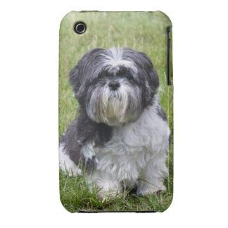 Shih Tzu dog cute photo iphone 3G case mate barely
