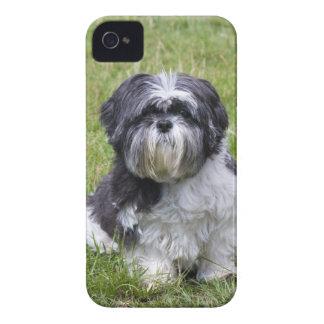 Shih Tzu dog cute photo iphone 4 case mate i/d