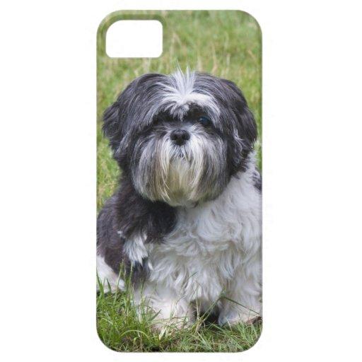 Shih Tzu dog cute photo iphone 5 case mate i/d