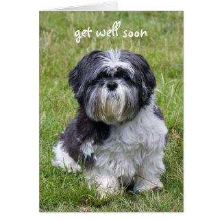 Shih Tzu dog get well soon greeting card